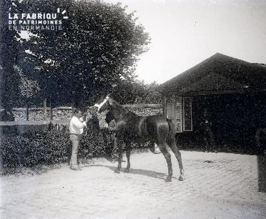 Présentation d'un cheval au haras national de Saint-Lô