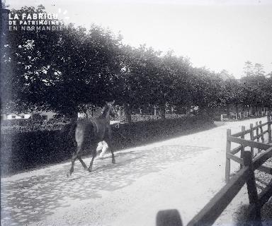 Présentation d'un cheval au trot au haras national de Saint-Lô