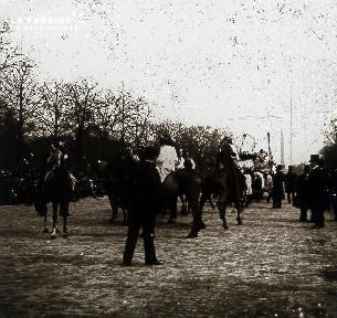 Groupe de chevaux pour le défilé