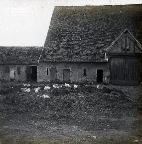 B009 Les poules dans la cour de la ferme