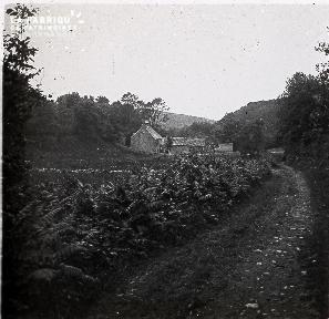 B013 La Hague Le chemin menant aux maisons