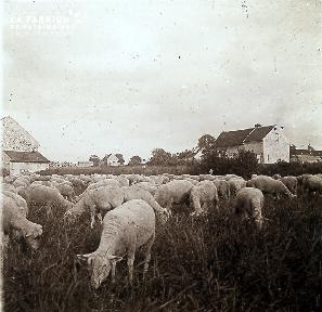 B013 Les moutons