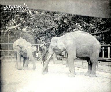 B016 Les éléphants