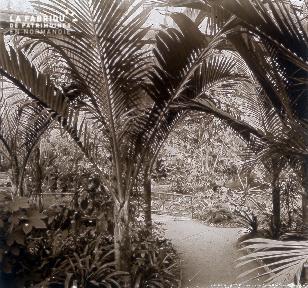B019 Foire Expo Universelle palmiers