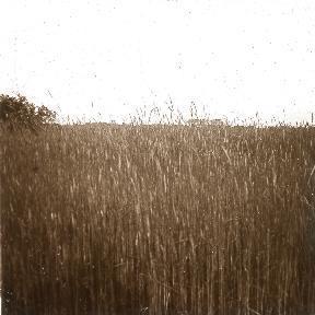 B021 La Hague champ de blé