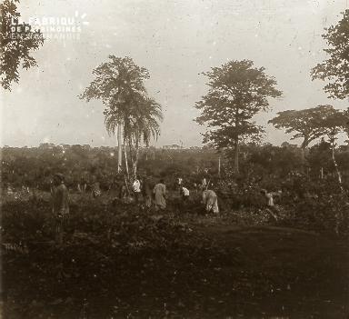 B023 Afrique scène de la vie quotidienne cueillette