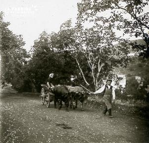 B026 Une femme assise sur une voiture tractée par des vaches et un homme