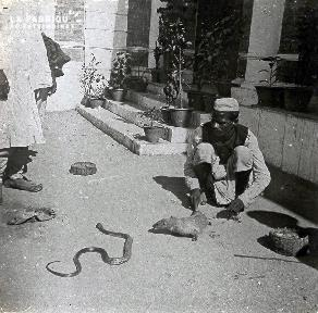 B027 Inde dresseur de serpent dans la rue