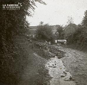 B028 Vache et veau dans un chemin derrière 1 maison