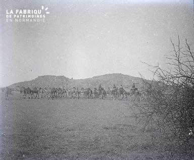 B029 Afrique troupeau de dromadaires