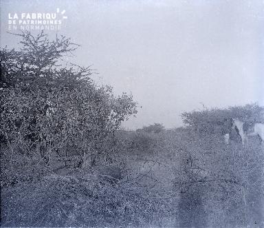 B030 Afrique un homme et un cheval