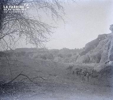 B030 Afrique troupeau de dromadaires devant les collines