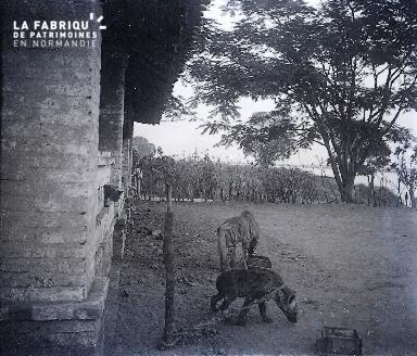 B038 Afrique 2 Hyènes enchainés