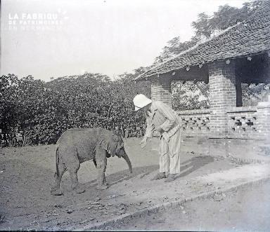 B038 Afrique colon nourrissant 1 éléphanteau