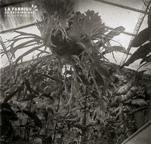 B041 plante dans serre