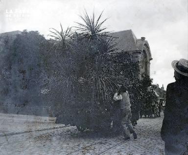B045 Palmiers dans une charette