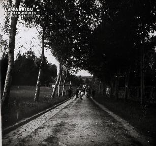 B051 La route sous les arbres