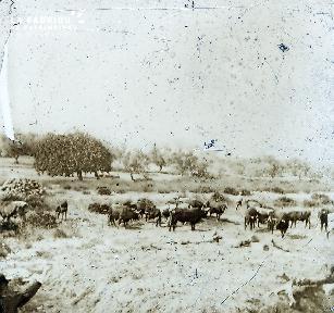 B051 Le troupeau