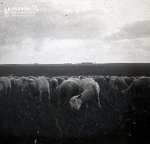 B052 Le troupeau de moutons 1