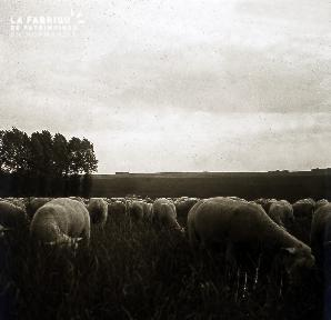 B052 Le troupeau de moutons 2