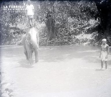 B053 Debout sur l'éléphant 1