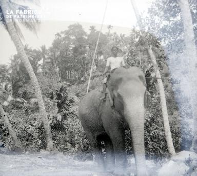 B053 L'éléphant 1