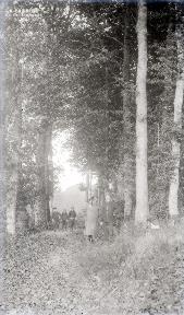 B085 Dans le sous bois