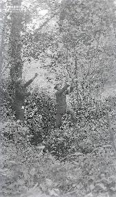 B090 Dans les branches