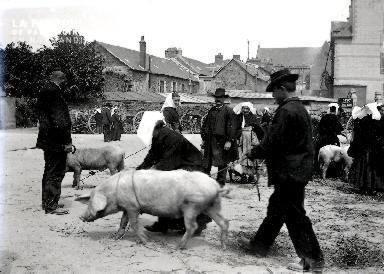 C001 Le marché aux cochons