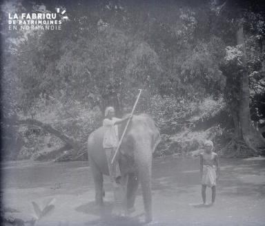 C007 L'éléphant