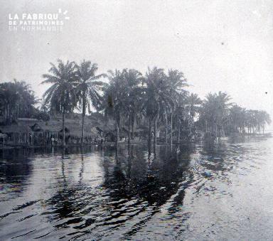 C008 Les palmiers dans l'eau