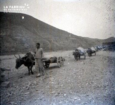 C009 Les chariots à buffles