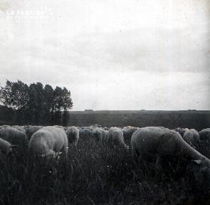 C009 les moutons