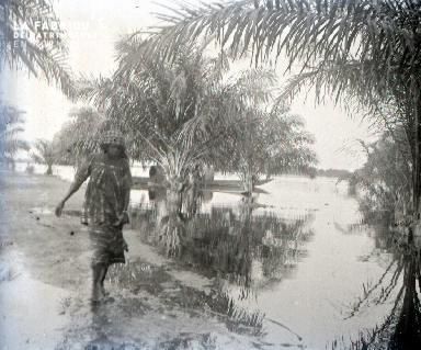 C011 La femme et les palmiers