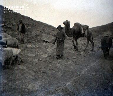 C011 Le troupeau