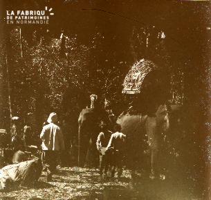 Cambodge Les éléphants