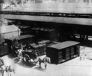 Chevaux attelés en gare parisienne