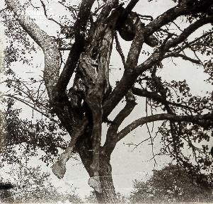 Cadavre de cheval dans un arbre