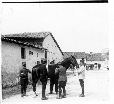 Militaires autour d'un cheval