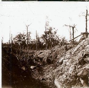 Bois des Gauritres