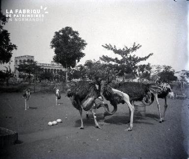Afrique-Autruches et marabouts