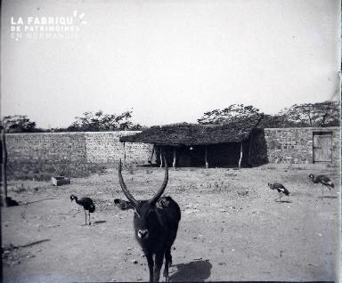 Afrique-Basse-cour