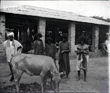 Afrique-Hommes autour d'un bovin