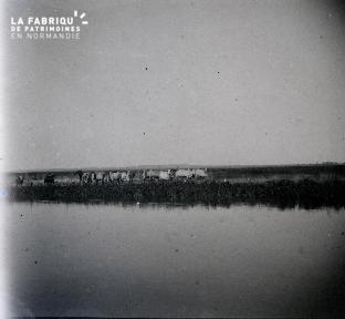 Rivière et au loin bovins