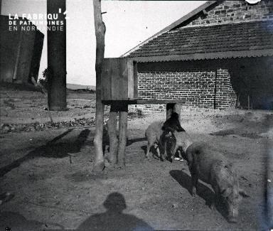 Singe jouant avec un porc
