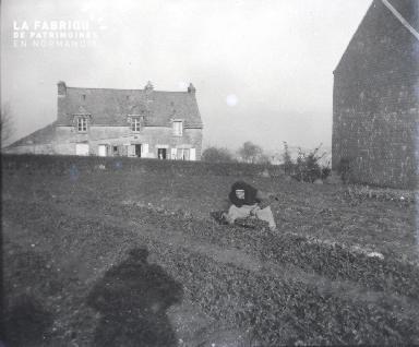 Vieille femme faisant la récolte