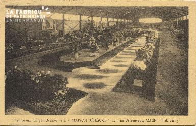 Cl 06 125 Caen-Les beaux Chrysanthèmes de la maison (MAISON SENEGAL)41