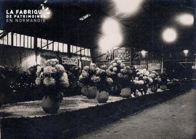 Divers- Etalage de fleurs- Lieu non précisé-