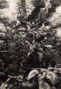 Plantes sous serre- Sans précision-