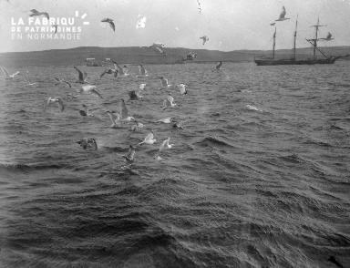 Shetlands Lerwick 14